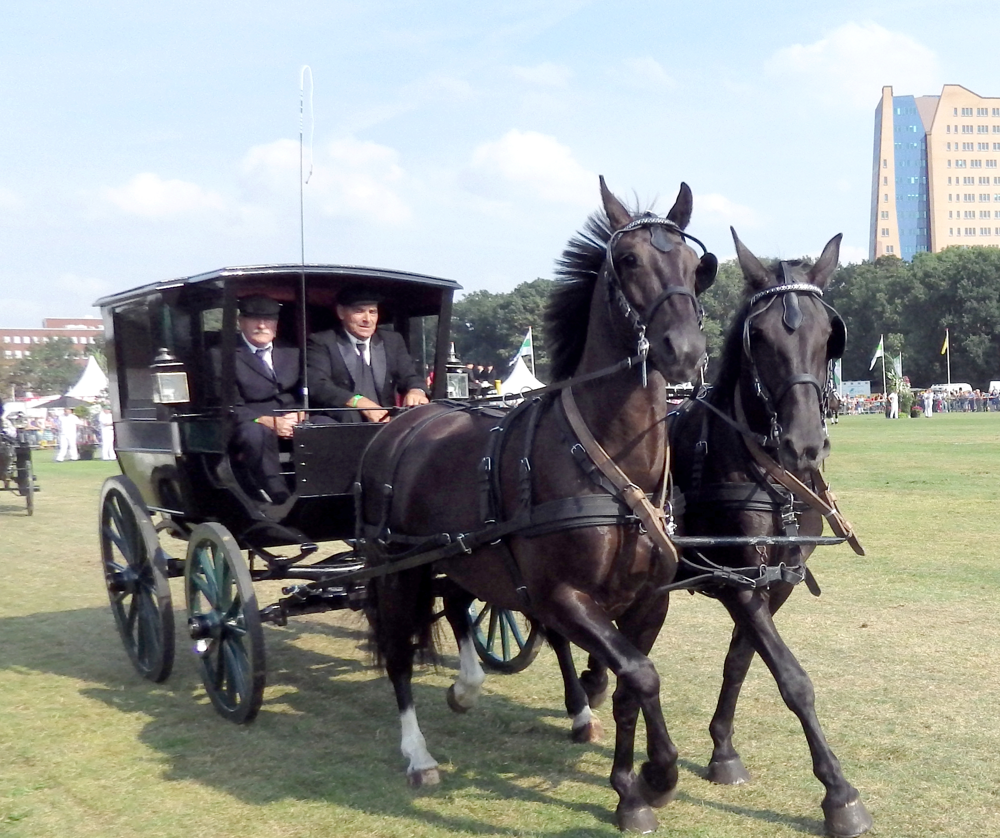 Paarden Stadspark Groningen Drafbaan