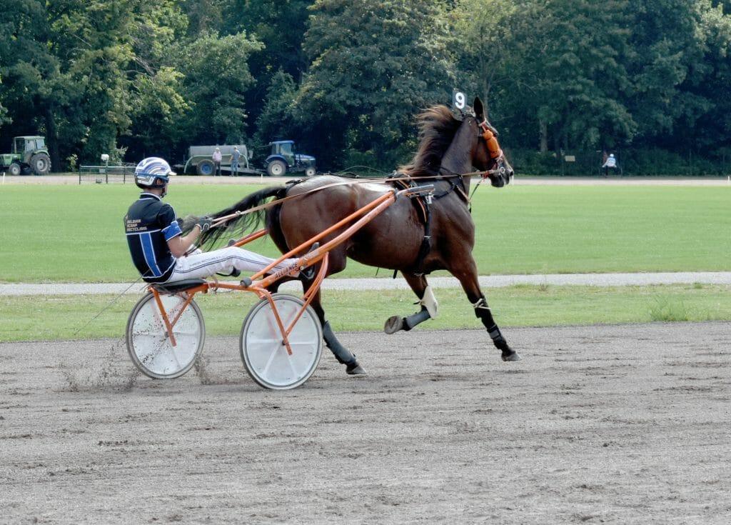 Paard Haya Alki- Pikeur Danny Brouwer Drafbaan Groningen 2020