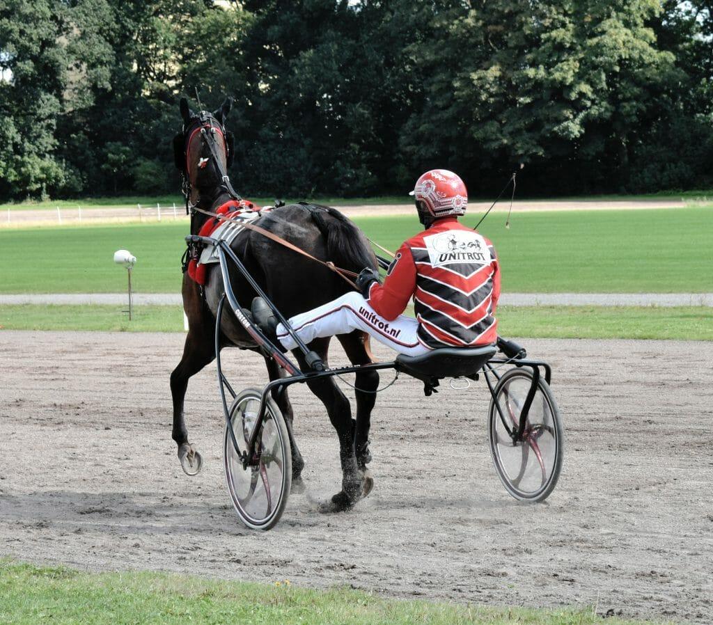 Paard Jasmine Dragon- Niels Jongejans Drafbaan Groningen 2020
